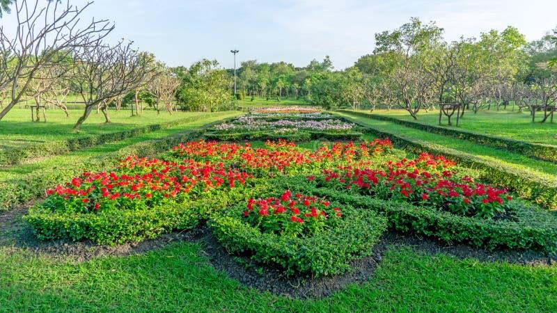 Teste padrão do estilo inglês do jardim formal, da pervinca vermelha de Madagáscar e da planta de florescência colorida florescen imagens de stock