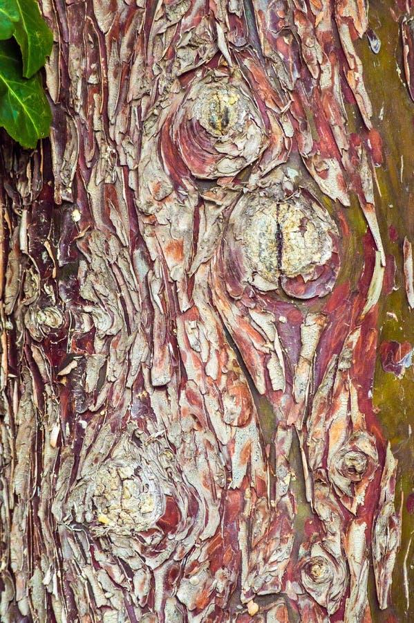 Teste padrão do fundo da árvore com cor vermelha fotografia de stock