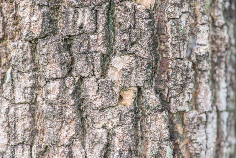 Teste padrão do fundo da textura da casca de árvore foto de stock