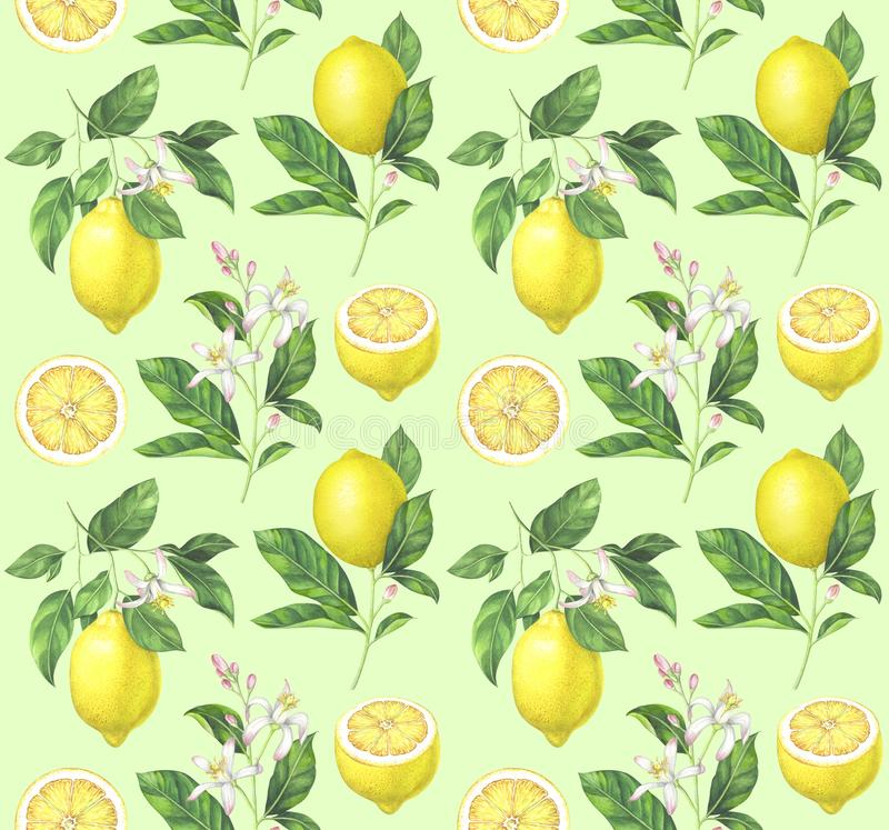 Teste padrão do limão da aquarela na luz - fundo verde ilustração royalty free