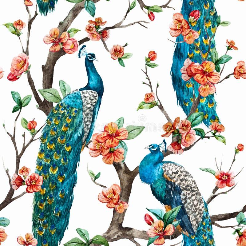 Teste padrão do pavão da quadriculação da aquarela ilustração royalty free