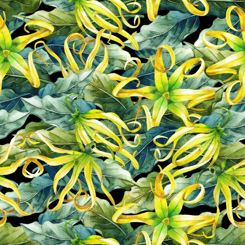 Teste padrão do ylang do ylang da aquarela ilustração royalty free