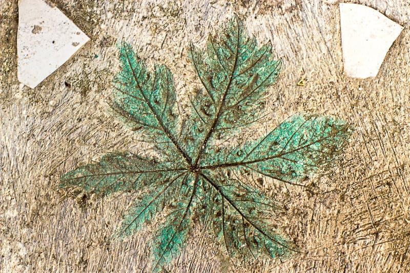 Teste padrão em folha de palmeira verde em um assoalho do cimento foto de stock royalty free