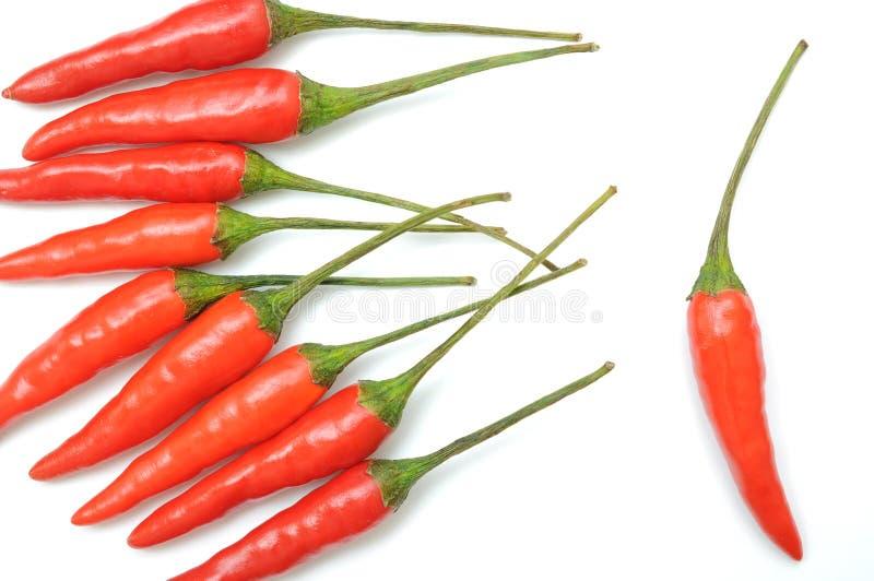 Teste padrão encarnado das pimentas de pimentão foto de stock royalty free