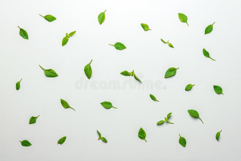 Teste padrão feito das folhas verdes da manjericão Conceito m?nimo do ver?o fotos de stock royalty free