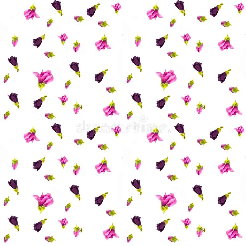 Teste padrão floral com os wildflowers cor-de-rosa e bege, folhas verdes, ramos no fundo branco Configuração lisa, vista superior ilustração stock