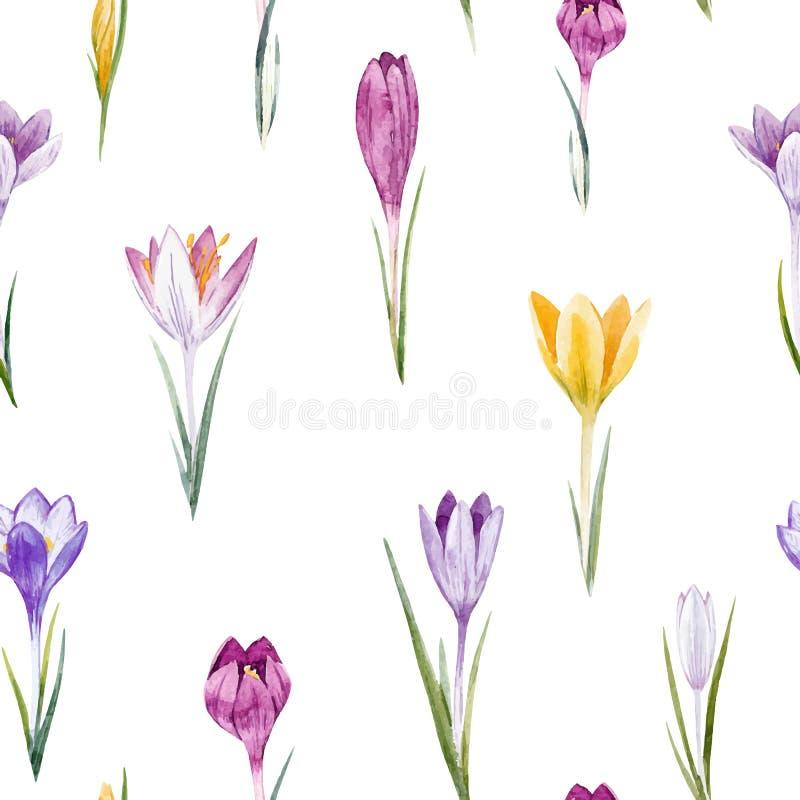 Teste padrão floral do vetor do açafrão da aquarela ilustração royalty free