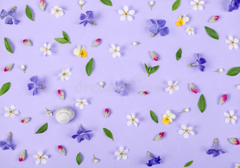 Teste padrão floral feito das flores brancas e violetas da mola, das folhas do verde, dos botões cor-de-rosa e do shell do caraco foto de stock