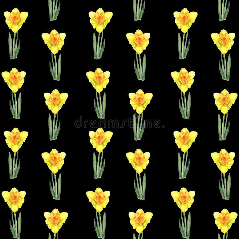 Teste padrão floral realístico botânico da aquarela com narciso Narciso da Páscoa Narciso amarelo amarelo brilhante em um preto imagens de stock royalty free
