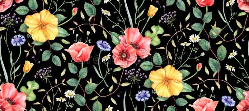 Teste padrão floral sem emenda com os wildflowers no fundo preto Ilustração tirada mão da aguarela ilustração royalty free