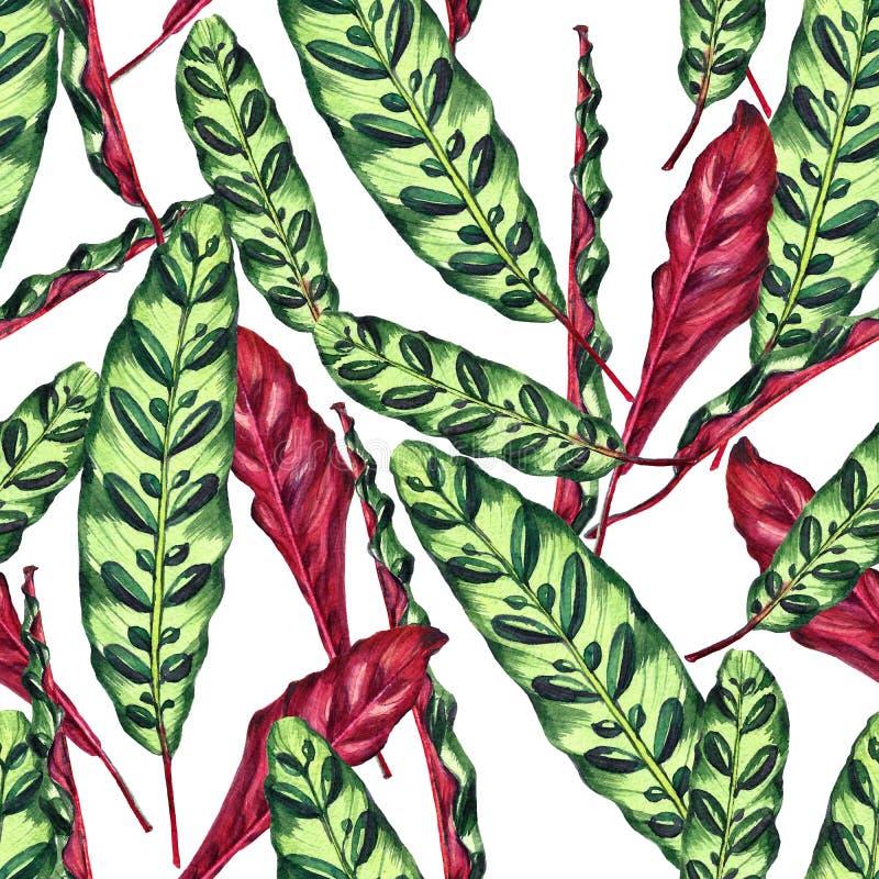 Teste padrão floral tropical feito a mão sem emenda ilustração do vetor