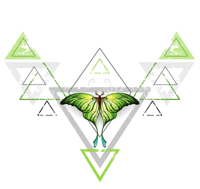 Teste padrão geométrico com borboleta verde ilustração do vetor