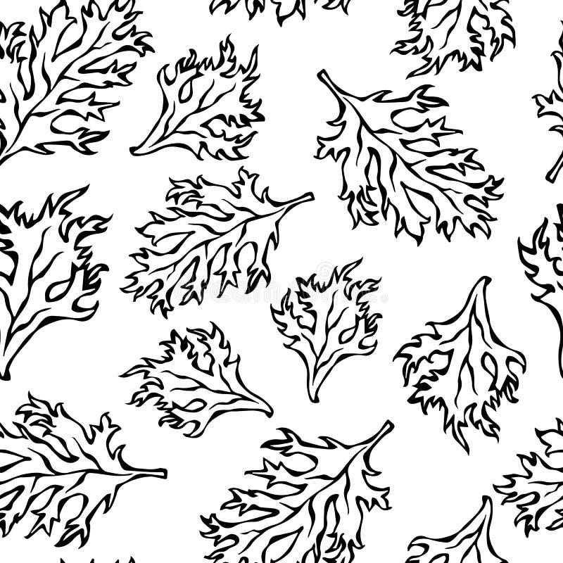 Teste padrão infinito sem emenda botânico de Curley Parsley Leaves verde Fundo com erva aromática Ingrediente de cozimento fresco ilustração royalty free