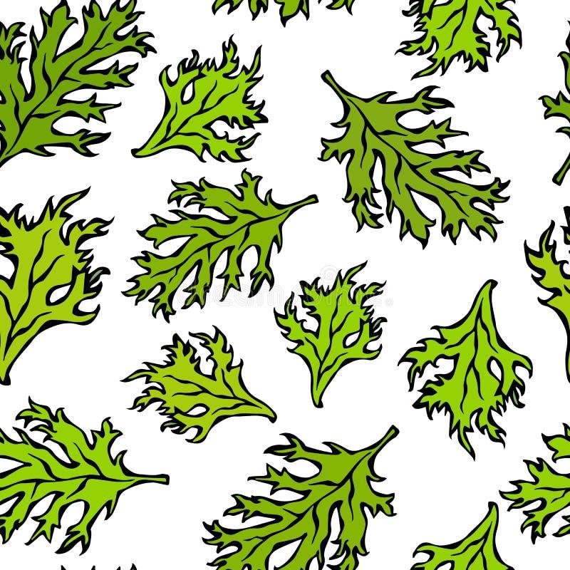 Teste padrão infinito sem emenda botânico de Curley Parsley Leaves verde Fundo com erva aromática Ingrediente de cozimento fresco ilustração stock