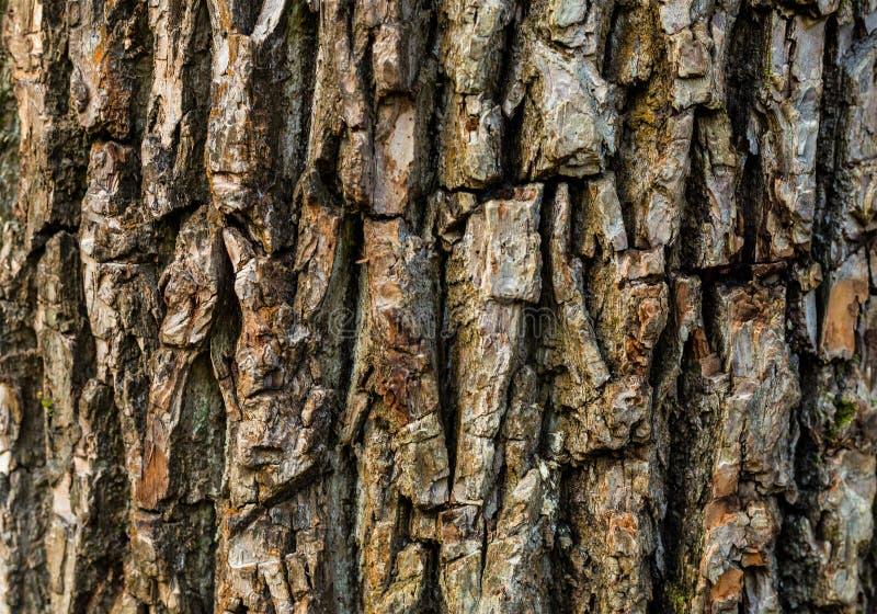 Teste padrão natural convexo do eco do sumário de madeira do fundo da textura foto de stock
