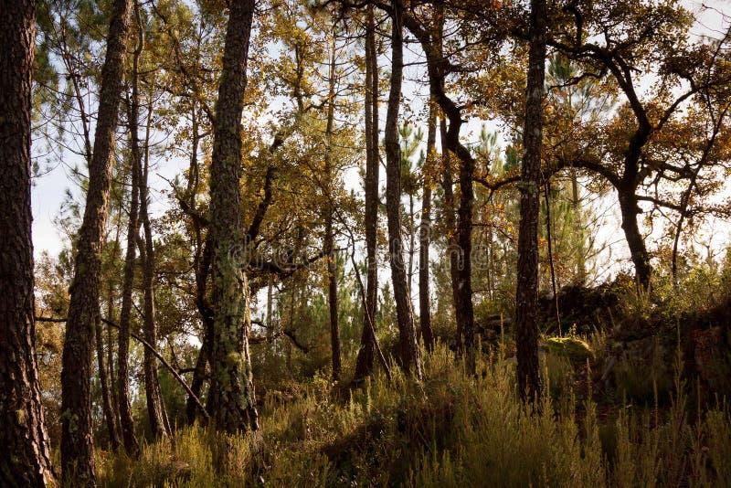 Teste padrão rural da árvore fotografia de stock royalty free