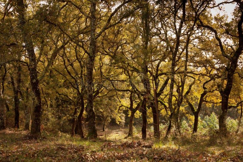 Teste padrão rural da árvore fotos de stock royalty free
