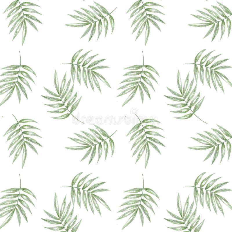 Teste padrão seamlless tropical com folhas de palmeira exóticas Folhas tropicas do teste padrão de Seamlless no fundo branco ilustração royalty free