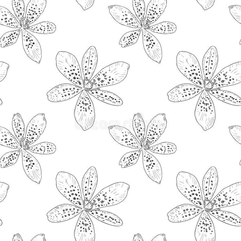 Teste padrão sem emenda com contornos pretos dos lírios no fundo branco, ilustração do vetor Flores bonitas para seu projeto ilustração stock