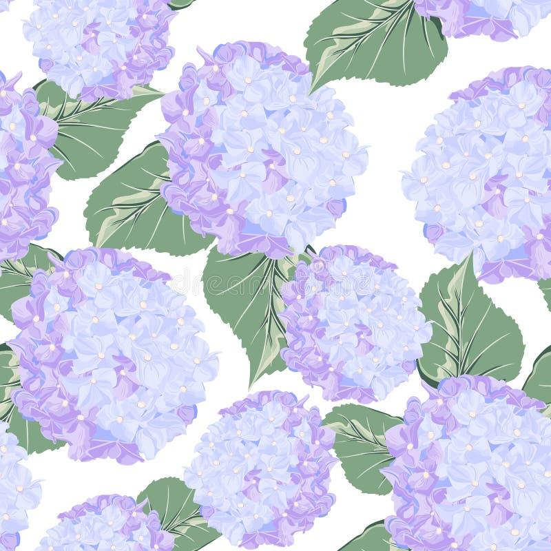 Teste padrão sem emenda com a flor violeta colorida do hydrange no fundo branco ilustração stock