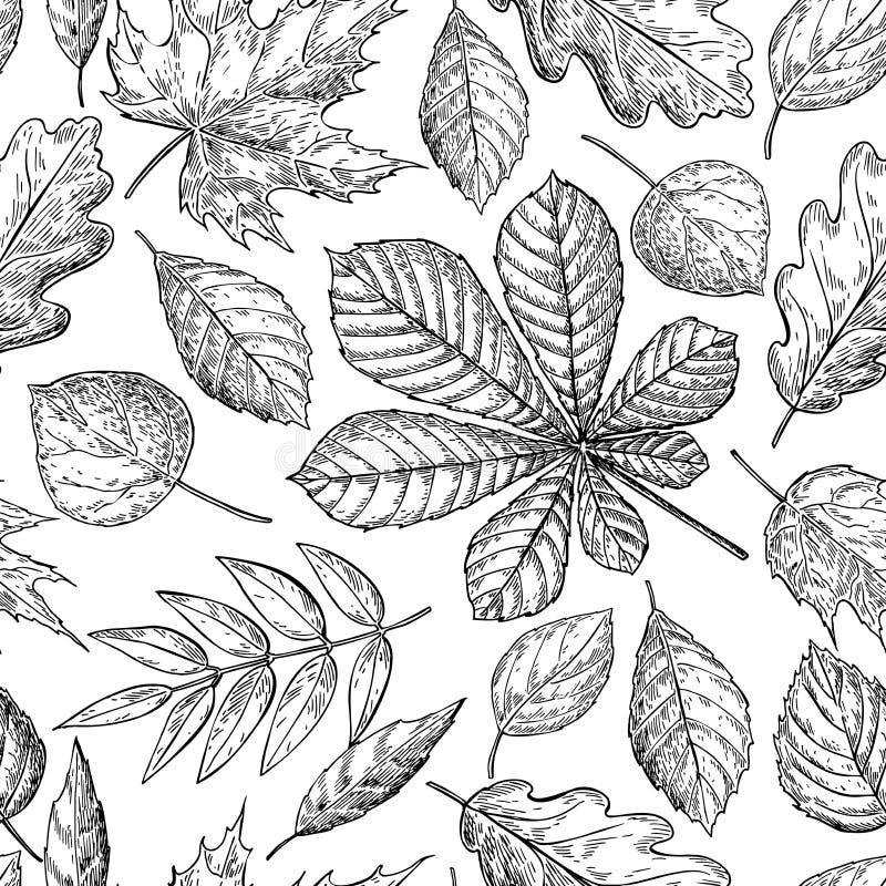 Teste padrão sem emenda com folhas de outono Mão tirada detalhada ilustração stock