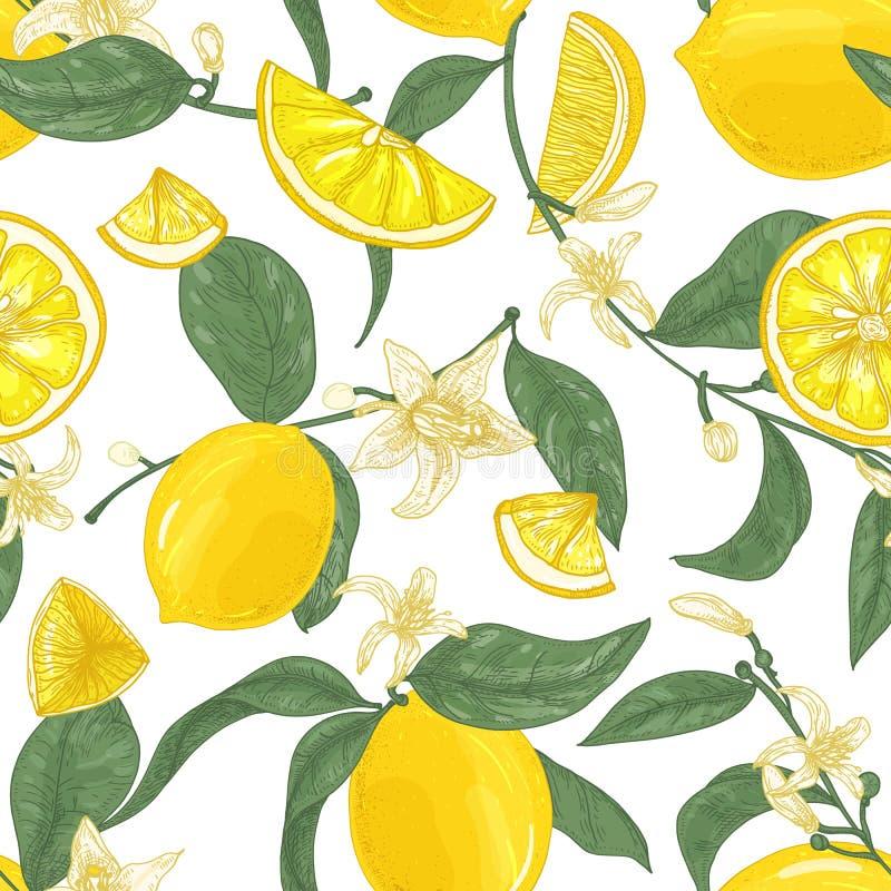Teste padrão sem emenda com limões, todo e corte em partes, em flores e em folhas no fundo branco Contexto com citrino ilustração stock