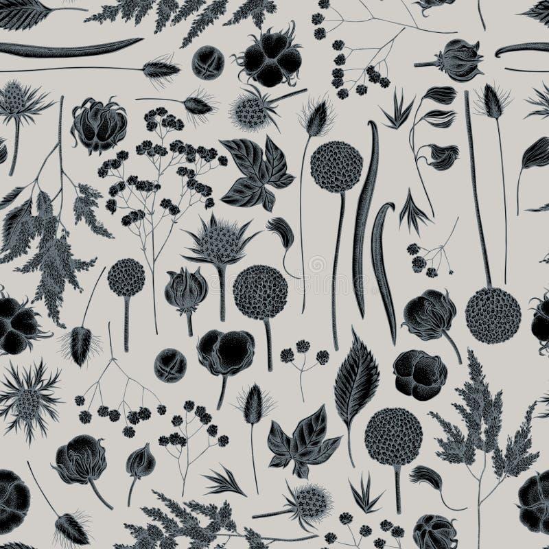 Teste padrão sem emenda com o astilbe estilizado tirado mão, craspedia, eryngo azul, lagurus, algodão, gypsophila ilustração do vetor