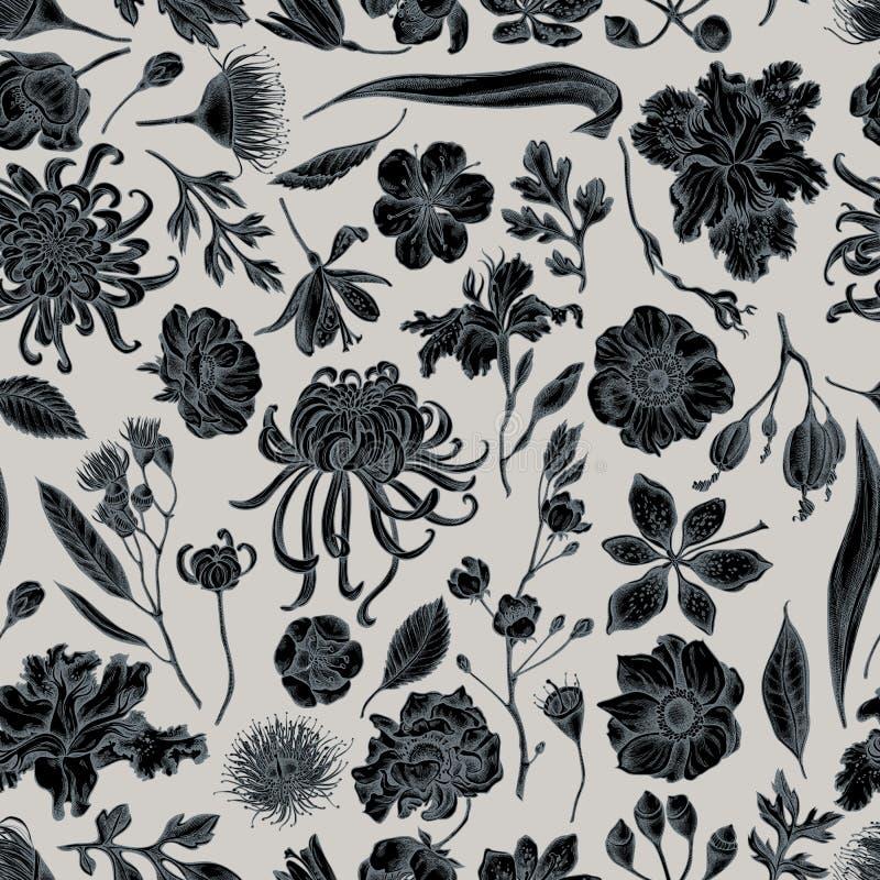 Teste padrão sem emenda com o crisântemo japonês estilizado tirado mão, lírio da amora-preta, flor do eucalipto, anêmona, íris ilustração stock