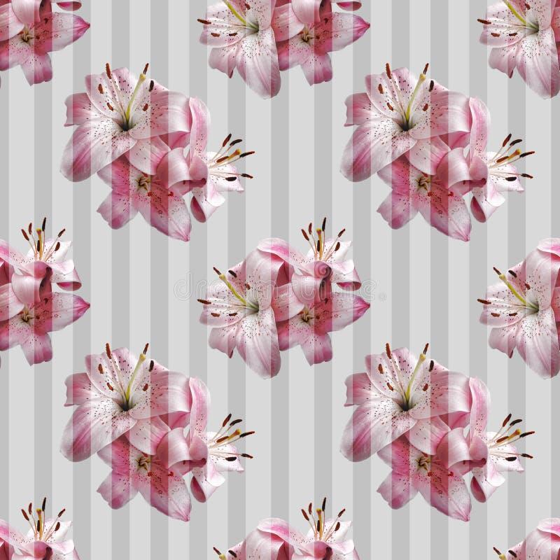 Teste padrão sem emenda com os lírios cor-de-rosa em listras transparentes foto de stock