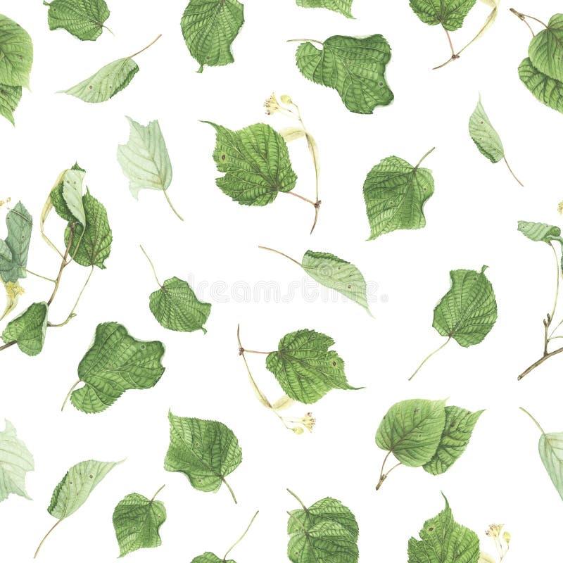 Teste padrão sem emenda com ramos e folhas do Linden, pintura da aquarela fotografia de stock