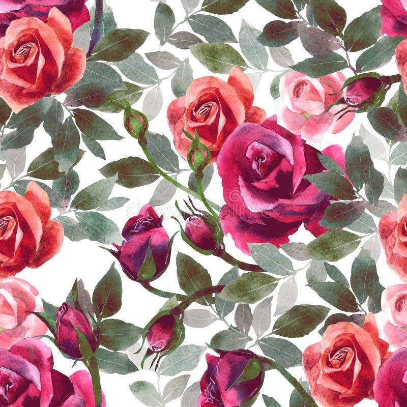 Teste padrão sem emenda cor-de-rosa do projeto do teste padrão de flor da pintura da aquarela ilustração stock
