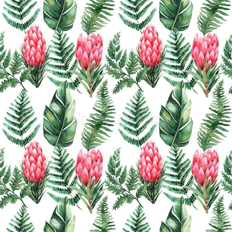Teste padrão sem emenda da aquarela com folhas e as flores tropicais greenery succulent Ilustra??o floral do projeto element Aper ilustração stock