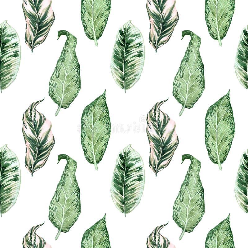 Teste padrão sem emenda da aquarela com folhas tropicais e folhas dos houseplants greenery succulent Ilustra??o floral do projeto ilustração royalty free