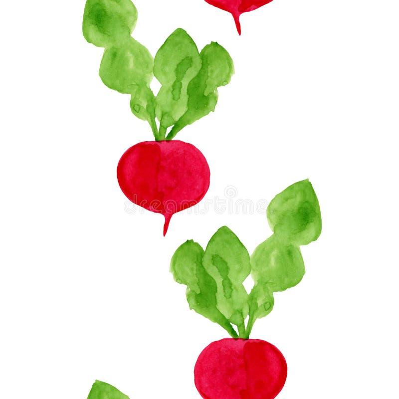 Teste padrão sem emenda da aquarela com rabanete Ilustração tirada mão do alimento da dieta do eco A beira saboroso dos vegetais  ilustração do vetor