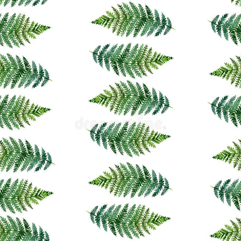 Teste padrão sem emenda da aquarela com samambaias tropicais ilustração do vetor