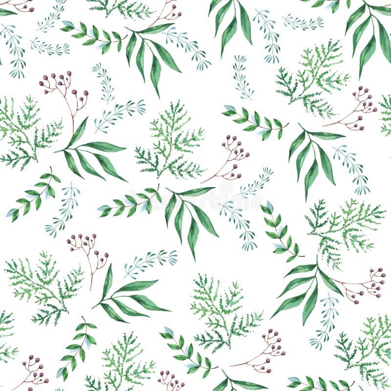 Teste padrão sem emenda da aquarela dos ramos, folhas verdes, ervas, planta tropical Fundo fresco do eco do vetor no branco ilustração royalty free