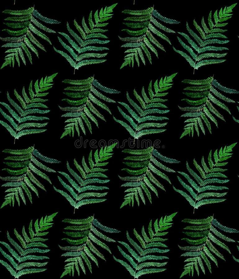 Teste padrão sem emenda da aquarela da samambaia no preto foto de stock royalty free