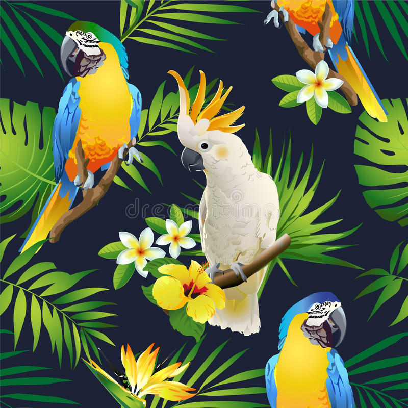 Teste padrão sem emenda da cacatua dos papagaios nos ramos tropicais com folhas e flores na obscuridade ilustração stock