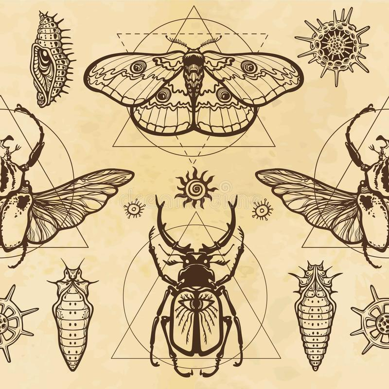 Teste padrão sem emenda da cor: imagem de uma borboleta, larva, colosso do erro, erro horned, geometria sagrado ilustração stock