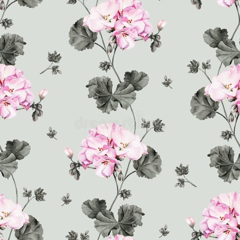 Teste padrão sem emenda da flor da aquarela do gerânio ilustração stock