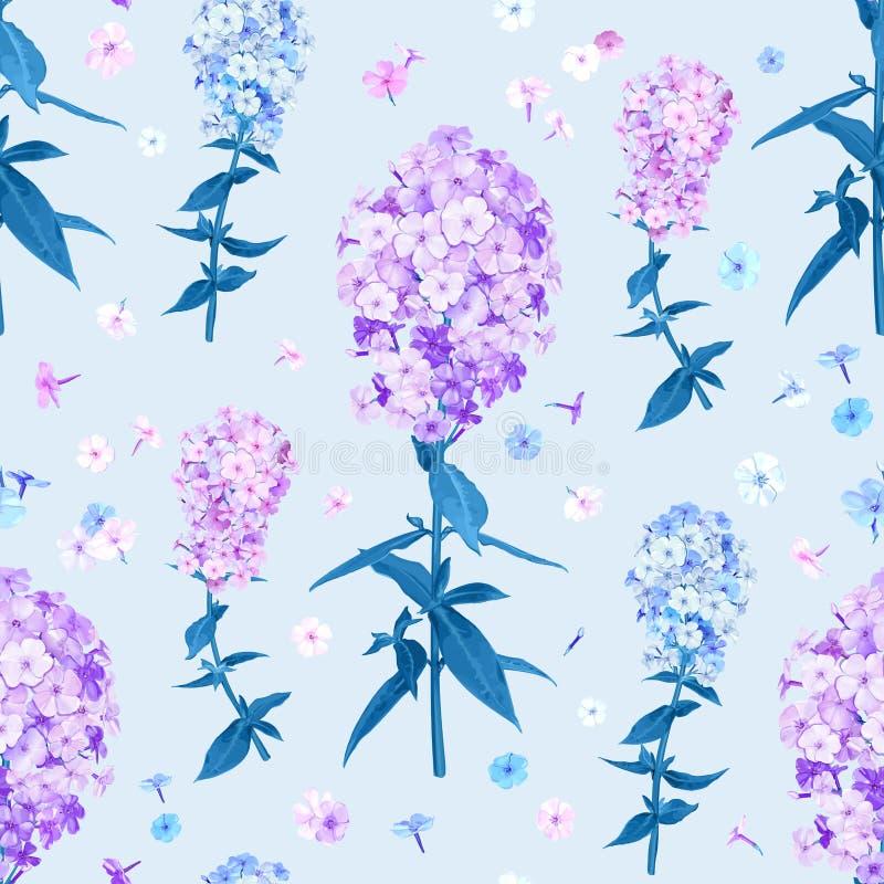 Teste padrão sem emenda da flor de Flox ilustração do vetor