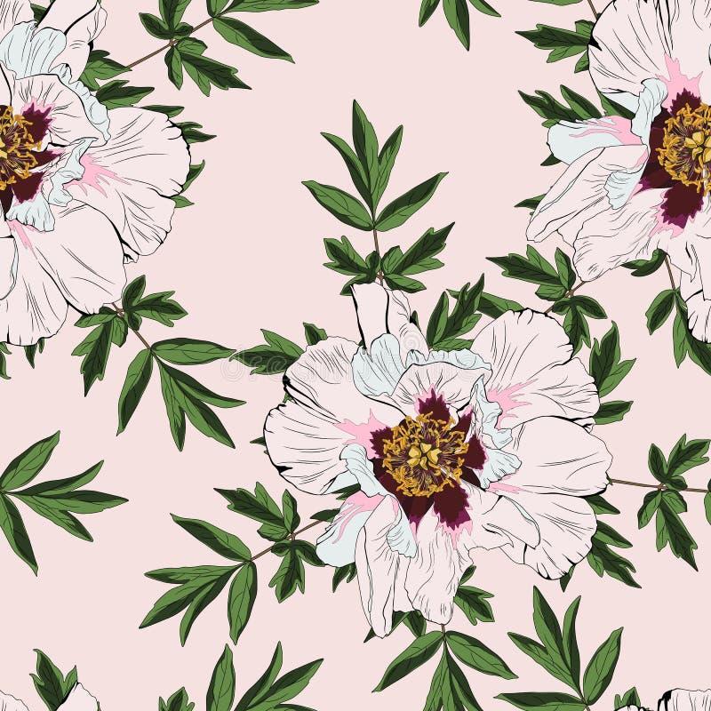 Teste padrão sem emenda da flor da peônia do Wildflower isolado no fundo do nude ilustração royalty free