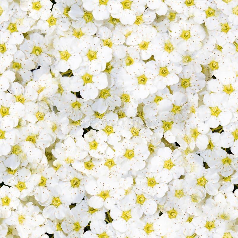 Teste padrão sem emenda das flores imagens de stock royalty free