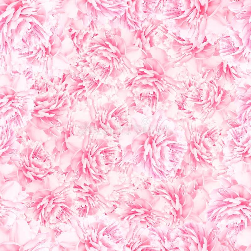 Teste padrão SEM EMENDA das flores da peônia foto de stock