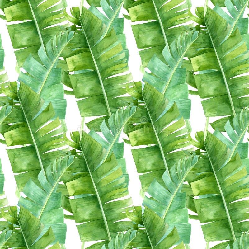 Teste padrão sem emenda das folhas de palmeira da banana imagem de stock royalty free