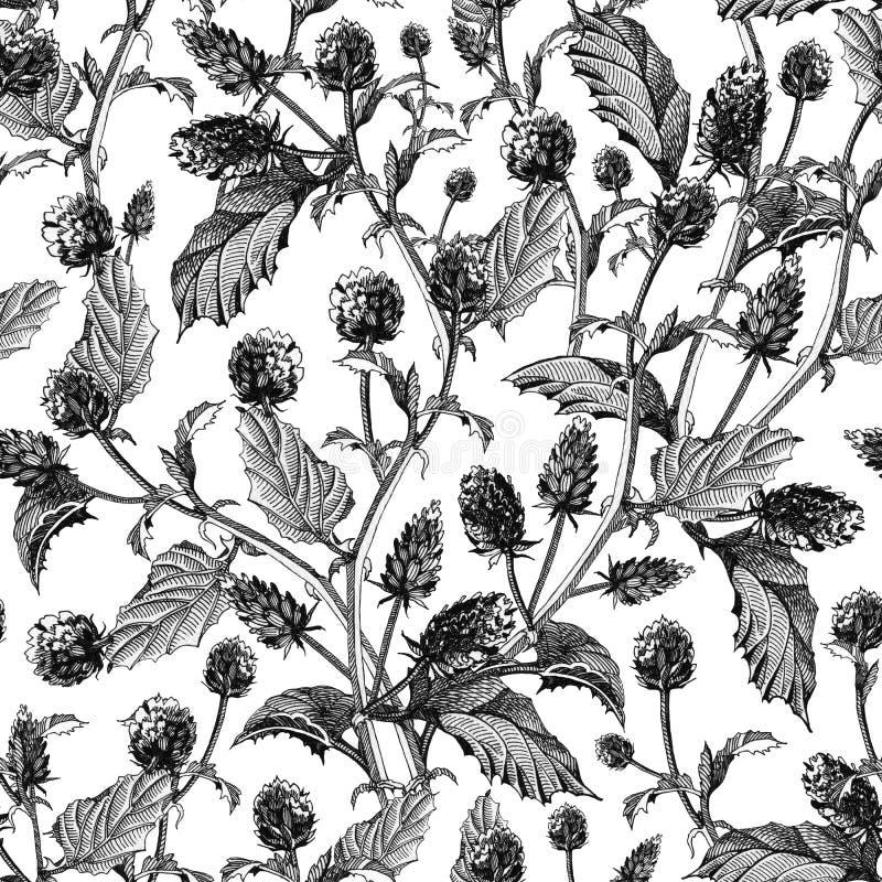 Teste padrão sem emenda de flores do psoralea com folhas Bakuchiol tirado mão, erva saudável, com de tinta preta, isolada no fund ilustração stock