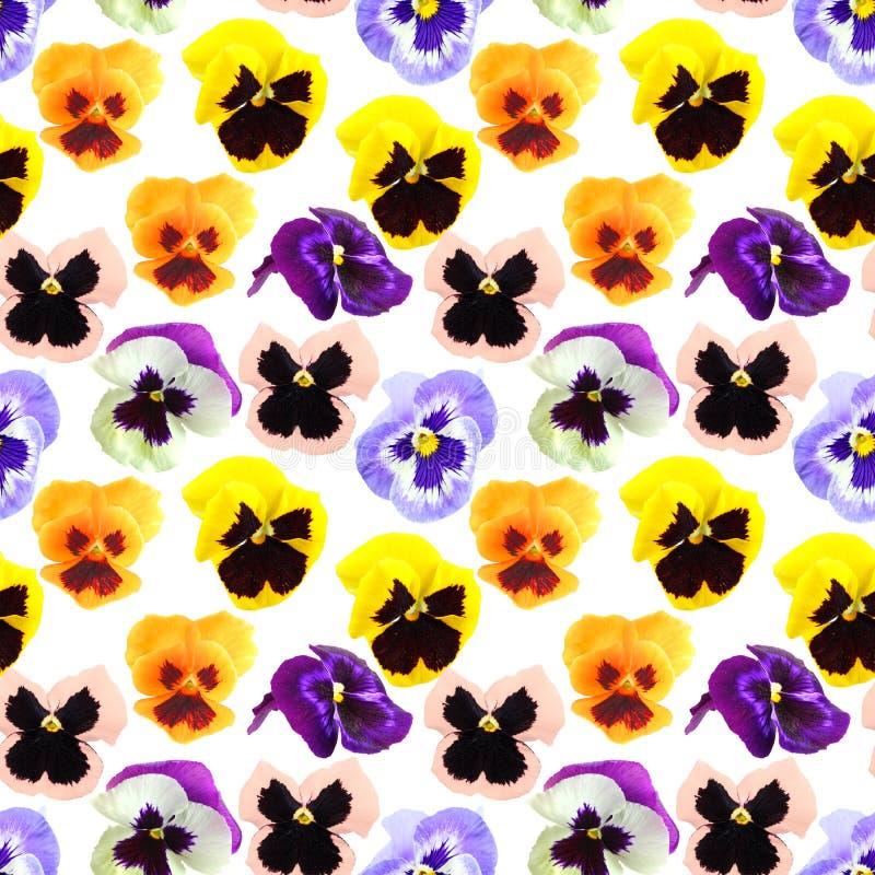 Teste padrão sem emenda de flores dos pansyes imagens de stock royalty free