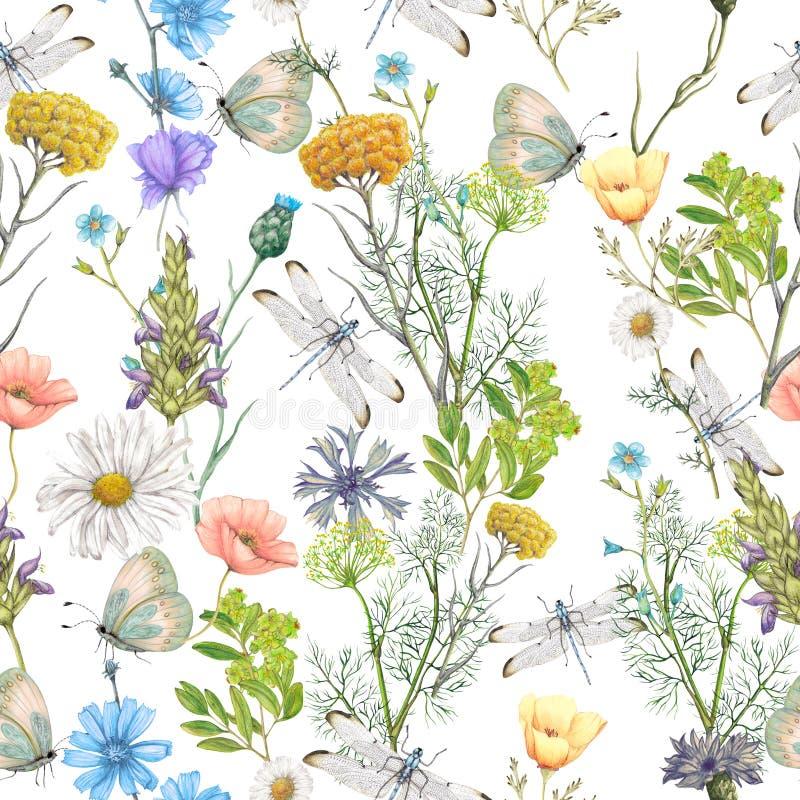 Teste padrão sem emenda de wildflowers do verão imagem de stock royalty free