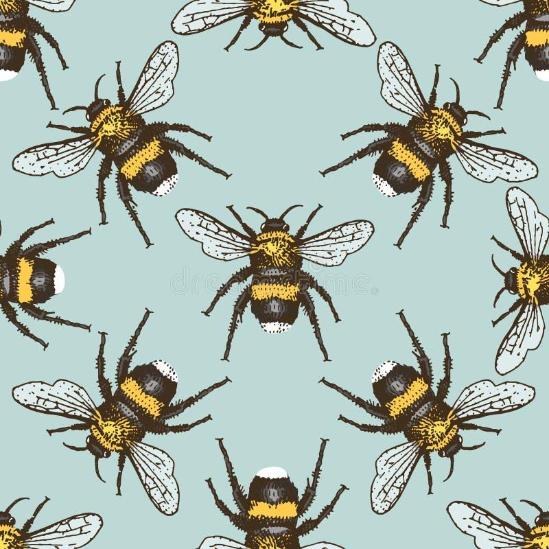 Teste padrão sem emenda do besouro do inseto, fundo com mão animal estilo tirado gravado ilustração royalty free