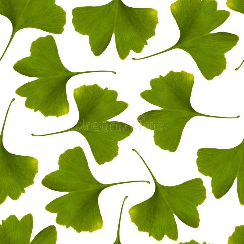 Teste padrão sem emenda do biloba da nogueira-do-Japão Backg verde da planta medicinal da folha foto de stock